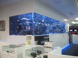 fish tank for office. Wondrous Betta Fish Tank Office Large Size Saltwater Sall Ideas: Full For