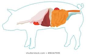Pig Anatomy Chart Pig Anatomy Images Stock Photos Vectors Shutterstock