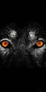 Angry Wolf Eyes Wallpapers #Angry #Wolf ...