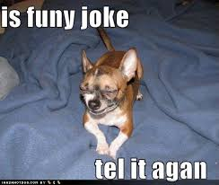 Image result for dog