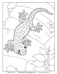 Small Picture Crawly Creepers BookOne Coloring Pages Animal Coloring Pages for