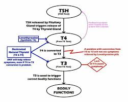 T4 To T3 Conversion Issues Thyroid Levothyroxine Symptoms