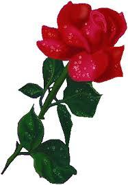Resultado de imagem para gif rosas