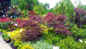 pinecrest nursery is a full service retail garden center and nursery located in west chester ohio we propagate and grow many of our trees and shrubs on