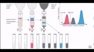 Ion Exchange Chromatography