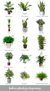 small office plant. Picture Of Plant Indoor Office Plants Amazing Low Light Small S
