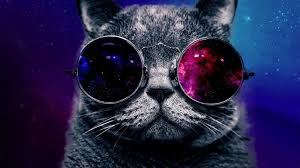 hd space cats wallpaper.  Cats Serious Space Cat 1366x768  In Hd Cats Wallpaper