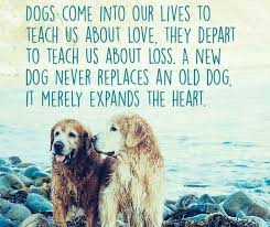 Inspiring Quotes About Love Amazing 48 Inspirational Quotes Every Dog Lover Should Read Funny Dog Top