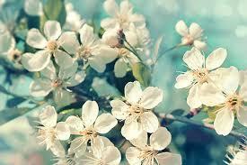 """Résultat de recherche d'images pour """"fleurs printemps"""""""