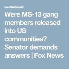 were ms 13 gang members released into us munities senator demands answers