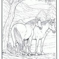 Kleurplaten Paarden Kleurplaten Kleurplaatnl