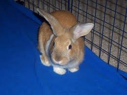Chewing Electrical Wires   The Lowdown On Rabbit Hutches