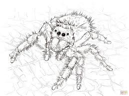 Small Picture Daring Jumping Spider coloring page Free Printable Coloring Pages