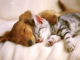 cute puppies and kittens kissing. Delighful Puppies Cute Cats Puppies Cute Dog Puppies Kittens Kissing Dongkel  Awesome  And Kittens T