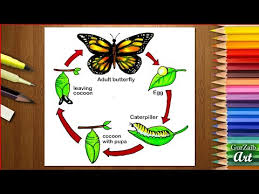How To Draw Life Cycle Of Butterfly Diagram Drawing Step By Step Drawing Tutorial Easy