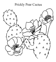 Small Picture Prickly Pear Cactus Drawing Images Pictures Becuo Coloring Home