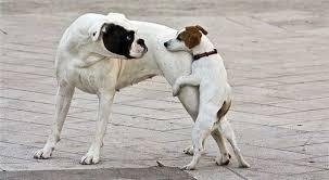 Resultado de imagem para horny dog
