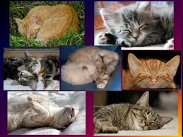cats collage wallpaper. Beautiful Wallpaper Cats Images Sleeping Cats Collage HD Wallpaper And Background Photos Throughout Collage Wallpaper
