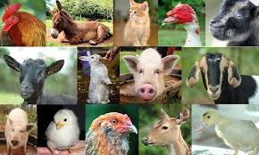 cute real farm animals. Contemporary Farm Ongoing Tours At Leilani Farm Sanctuary Inside Cute Real Animals H