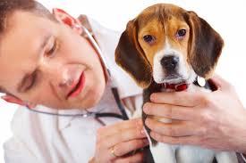 Resultado de imagen para veterinario