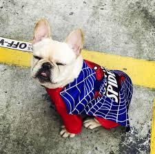 Super Hero Frenchie Costumes Spiderman Superhero French