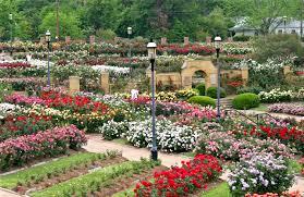 tyler texas rose garden one of the largest rose gardens in america
