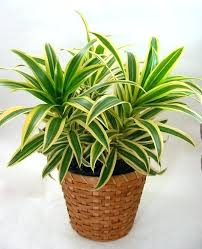common house plant of common house plants vines