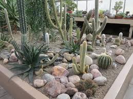 Small Picture Home Cactus Garden VidPedianet VidPedianet