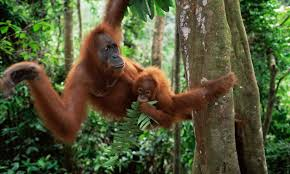live jungle animals. Perfect Live Living Among The Trees Five Animals That Depend On Forests Intended Live Jungle Animals E