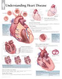 Understanding Heart Disease 1454