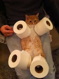 Image result for toilet paper dispenser