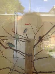 Birds on a Limb Photograph by Glenda Fink