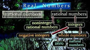 Hierarchy Chart Of Real Numbers Real Numbers Hierarchy