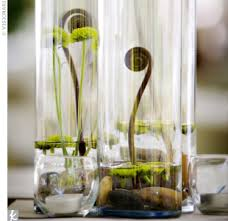 tall glass vases with fiddleheads
