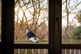 looking out of a window at a pigeon on a balcony