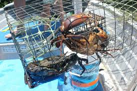 diy crab traps having good bait boxes makes the differences between a single capture and multiple