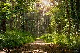 Forest Sunlight Background High Quality Free Backgrounds