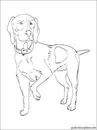 Kleurplaten Duitse Staande Hond Gratis Kleurplaten