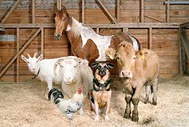 farm animals together. Delighful Animals Baby Farm Animals For Farm Animals Together F