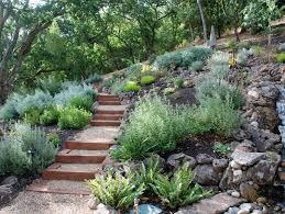 drought resistant garden. Contemporary Drought Drought Resistant Landscaping In Garden