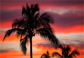 palm trees sunset tumblr. Palm Tree Sunset In Wailua Trees Tumblr
