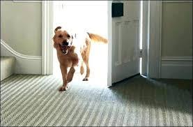 pet friendly area rugs pet friendly rugs picture pet friendly area rugs durable pet friendly area