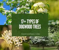 17 types of dogwood trees bark