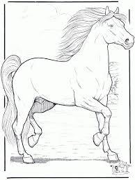 Kleurplaten Paarden En Honden Norskiinfo