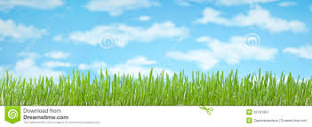 free banner backgrounds grass sky banner background stock image image of environment rich