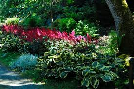 Small Picture Perennials for Shade in Dry or Moist Areas A Toronto Master