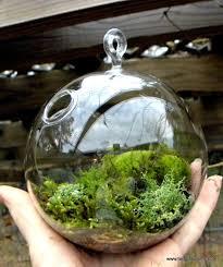 hanging glass globe diy moss terrarium kit live assorted moss lichens glass ball included wedding decor