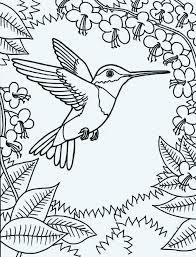 Humming Bird Coloring Pages Amazing Of Hummingbird Printable Animal