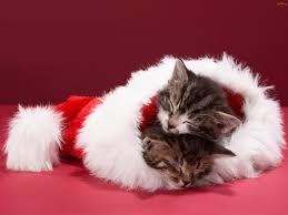Christmas Kitten Wallpaper ...