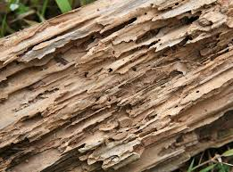 termite damaged wood showing rotting galleries outside of a conneaut lake home